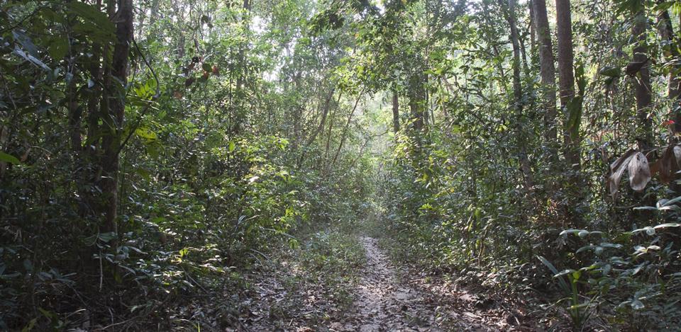 Forest habitat koh ker