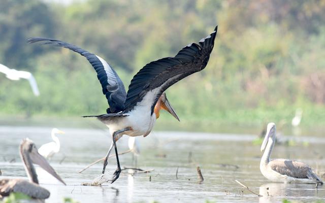 Explore Cambodia's Wildlife